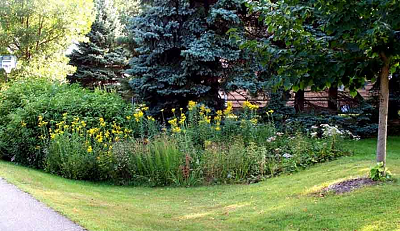 swale side yard