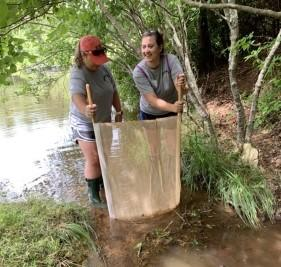 Volunteer using a kick seine net to collect macroinvertebrates